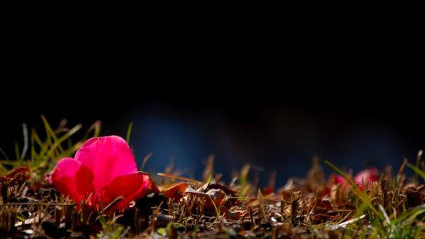 暗闇の中の花